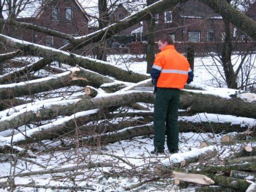 Robert komt de boom zagen, lang genoeg Robert?