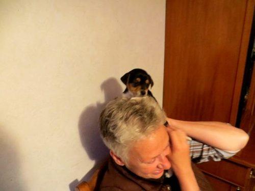 Nieuwe hond Pukkie 3